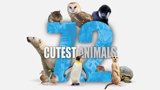 Netflix Box Art for 72 Cutest Animals - Season 1